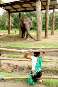 Jess-Saxton- Elephant breeding centre Chitwan Nepal