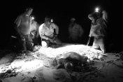 Turtle Camp Aug 2013 040 copy